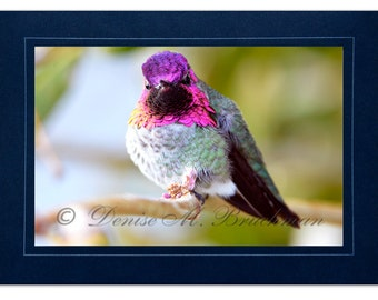 Hummingbird Photo Greeting Card - Bird Card Blank Inside - Blank Hummingbird Note Card - Pink Purple Bird Photo - Anna's Hummingbird Card