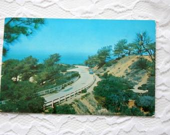Vintage 1959 Torrey pines Postcard, Santa Barbara Postcard, California Postcard, California Coastline, Rare Trees