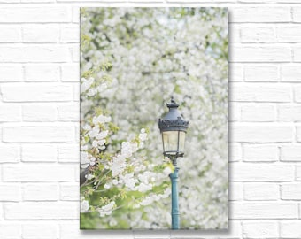 Paris Photograph on Canvas - White Cherry Blossoms in Paris on  Paris in Spring, Gallery Wrapped Canvas, French Home Decor, Large Wall Art
