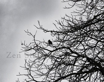 The Watcher Bird Photography. Wall Hanging. Nature Photography Print. Wall Art Photo Print, Framed Print, or Canvas Print. iPhoneography.