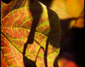 Red Chartreuse Leaves Photograph--Chartreuse and Red--Fine Art