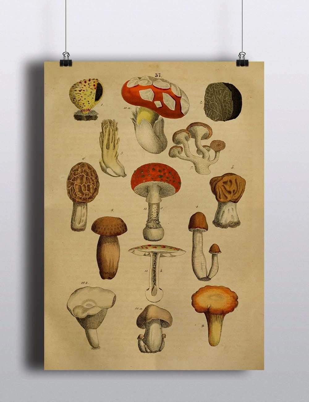 Antique 1800s Mushroom Botanical Print Poster Art Print