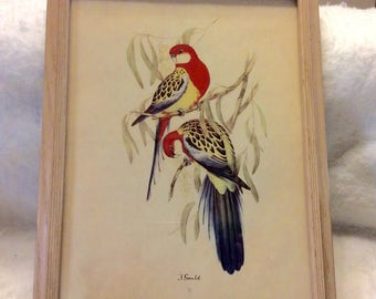 Vintage original print J Gould Sydney Z Lucas 1930s. Free ship to US