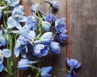 "Botanical art print, flower still life photography, periwinkle blue wall art, brown rustic wood wall art print ""Blue Delphiniums"""