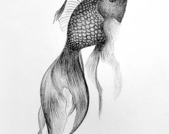 Fine Art Print of Graphite Illustration: Black Gold by Christie A. Thompson