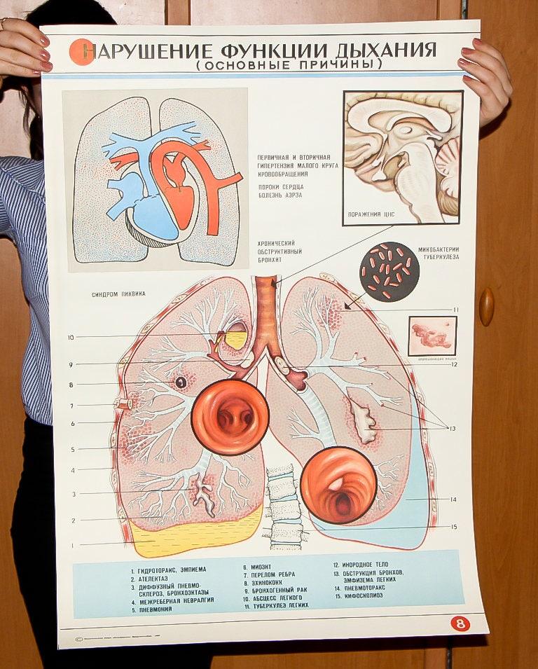 Großer Kunst menschlichen Anatomie Vintage medizinischen