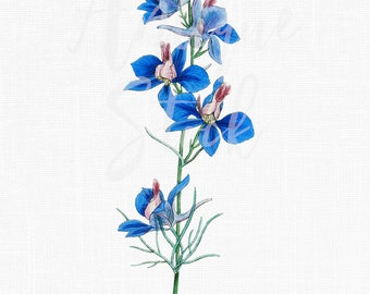 Blue Vintage Flowers 'Rocket Larkspur' Botanical Illustration Digital Download for Invitations, Scrapbook, Prints, Collages, Crafts...