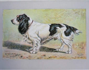 ANTIQUE 1907 FIELD SPANIEL signed dog print Chromolithograph P Mahler German artist Collectors item Christmas, Birthday gift Authentic