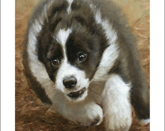 Border Collie Puppy Dog Portrait by award winning artist JOHN SILVER. Personally signed A4 or A3 size Print. BC011SP