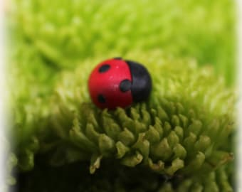 Hand crafted polymer clay ladybug stud earrings. Red and black. Cute yet sophisticated!