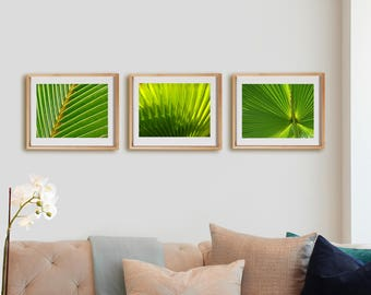 Nature 3H Print Collection.  Detail photography, palm tree, fronds, tropical, wall art, artwork, large format photo.