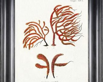 CORAL PRINT Esper 8x10 Art Print 9 Beautiful Antique Sea Ocean Ivory Coral Nature to Frame Home Decoration Nautical Seashore