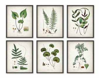 Green Plant Wall Decor Set Of 6 - Botanical Art Posters - Antique Plant Book Plate Illustration Giclee Picture - B532