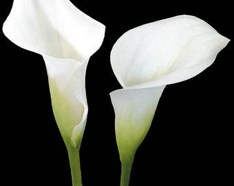 Calla Lily - flower cutter set for gum paste, polymer clay