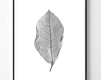 Skeleton leaf, Plant Print, Modern, Plant Photography, Minimal photo, Plant Wall Art, Minimalist Print, Scandinavian Printable Art, Modern