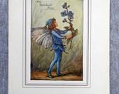 Speedwell Flower Fairy Vi...
