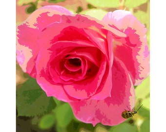 Rose With Green Bug - nature photography