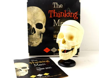 Vintage Human Skull Anatomy Model with Teeth, Life Size (c1960s) - Collectible Halloween Decor
