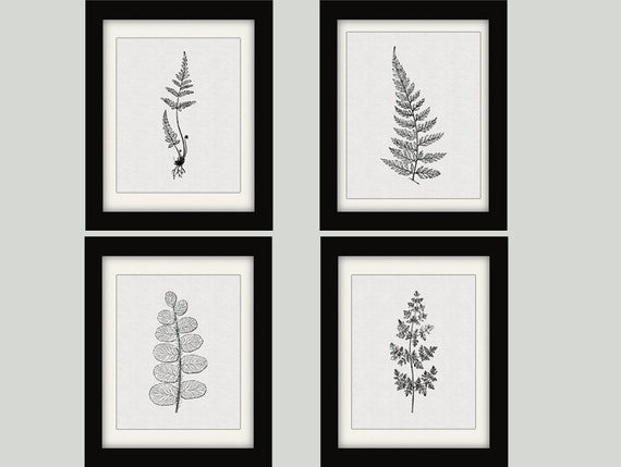 Black ferns botanical prints fern prints fern botanical
