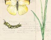 Botanical Painting - Prin...