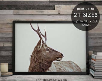 Deer wall art, wall art, antler art, deer antlers, printable art, antler print, deer print, antlers print, deer antler print, photograph, 92