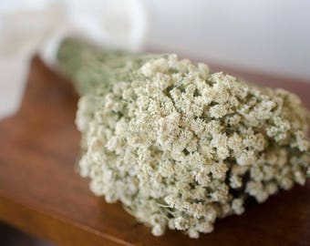 Dried achillea of pearl bunch, white dried flowers, white wedding flowers, filler, dried flower filler, white dried flowers, baby's breath