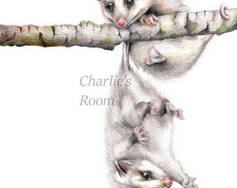 Baby possums