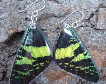 Madagascan Sunset Moth Resin Earrings (forewing)