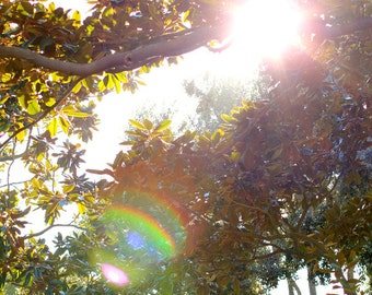 Sunshine Through the Trees - Nature Photography Photo Print - Size 8x10, 5x7, or 4x6