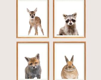 Woodland Animals, Nursery Animal Prints, Baby Animal Portraits, Set of Four Prints, Deer Print, Raccoon Print, Fox Print, Rabbit Print