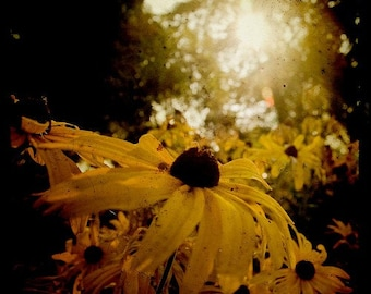 Floral Photography, Flower Decor, Floral Art, Square Print, Home Decor, Sun Bathing, TTV
