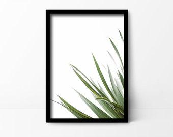 Botanical Print | Leaf | Green | Tropical - Plant | Photo Paper| - Poster
