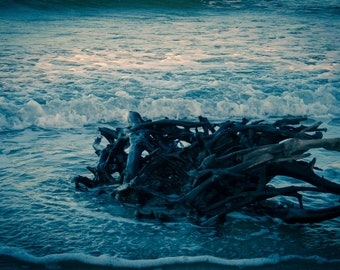 Driftwood in the OBX: Digital Photography Download