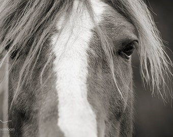 Horse Photography, black and white horse photography, fine art equine photography, Horse Poster, Horse Picture