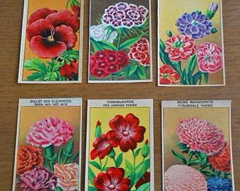 6 SEED PACKET LABELS Flowers Pansy Sweet William Wall Flower Daisy Red Anemone 1920s French Garden Art, Vibrant Color Holiday Cards Collage