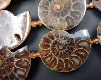 "Sliced Ammonite Fossil Beads 35mm Center Drilled 16"" Strand"