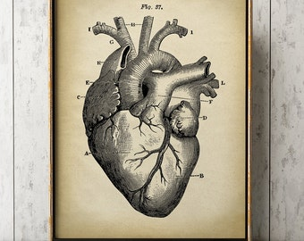 HEART ANATOMY PRINT, heart print, anatomical drawing, anatomy poster, scientific illustration, medical wall art, doctor gift, heart drawing