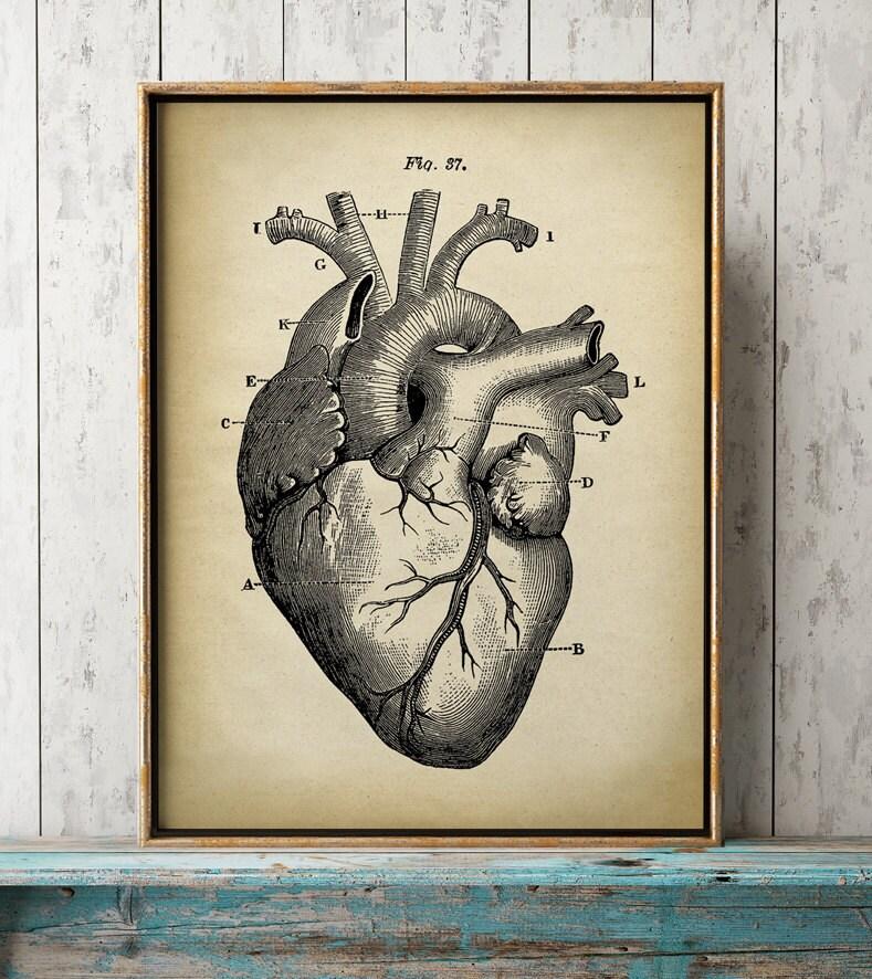 Vistoso Corazón Anatomía Arte Motivo - Imágenes de Anatomía Humana ...