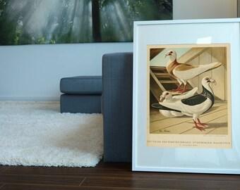 Pigeons Antique Print| Pigeon Art| Vintage Pigeon Print| Pigeon Wall Art| Natural Art| Affiche Oiseau| Birds Wall Art Print| HAP031