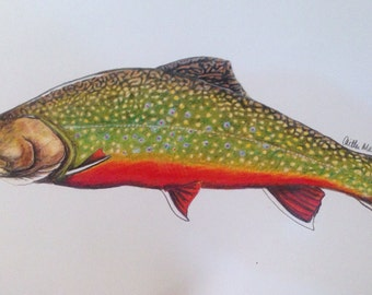 "FULL size 6.5x10.5"" Brook Trout Limited Edition Print"