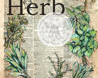PRINT:  Herb Mixed Media Drawing on Antique Dictionary Page