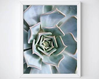 Succulent Art Print, Succulent Photography, Succulent Wall Art, Succulent Poster, Cactus Art Print, Cactus Photography, Cactus Wall Art