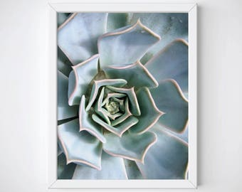 Captivating Succulent Art Print, Succulent Photography, Succulent Wall Art, Succulent  Poster, Cactus Art Print, Cactus Photography, Cactus Wall Art