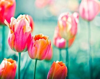 botanical photography tulip art print flower photography 8x10 20x30 fine art photography floral spring decor summer red tulips teal wall art