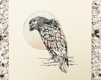 Grey Parrot - Bird Series