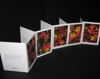 Hojas Series (Autumn Leaves) - Greeting Card 5-pack