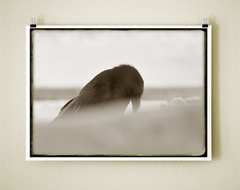 CROW PRAYER - 8x10 Signed Fine Art Photograph