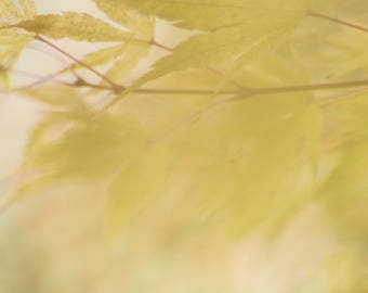 Fall Leaf Photograph, Yellow Autumn Leaves, Abstract Photograph, Pastel, Ethereal, Dreamy, Autumn Tree, Gold, Fine Art Nature Photography