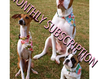 Monthly subscription COLLAR