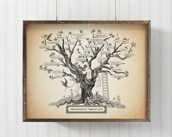 Microbiology Phylogenetic Tree Of Life Poster, Science art, Biology print, Evolution wall decor, 8 x 10 in,  11 x 14 in